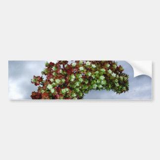 Floración del Hydrangea de Oakleaf Pegatina De Parachoque