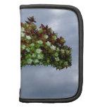Floración del Hydrangea de Oakleaf Organizadores