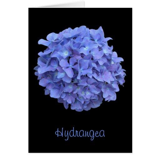 Floración del Hydrangea y tarjeta azules de los he