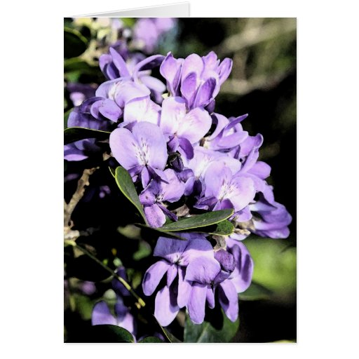 Floración del laurel de montaña tarjeta de felicitación