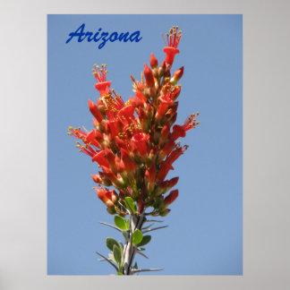 Floración del Ocotillo - Arizona Impresiones