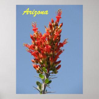 Floración del Ocotillo - Arizona Posters