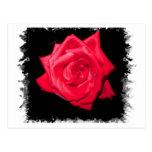 Floración del rosa rojo contra un contexto dentado postal