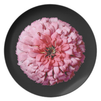Floración del Zinnia Plato De Comida