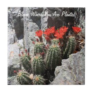 Floración donde le plantan azulejo cuadrado pequeño