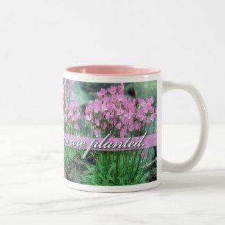 Floración donde le plantan, estrella fugaz taza