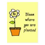 Floración donde le plantan II Tarjetas Postales
