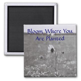 Floración donde le plantan imán cuadrado