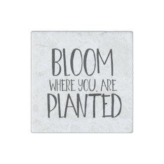 Floración donde le plantan imán de piedra