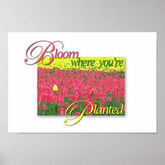 Floración donde le plantan posters