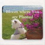 Floración donde usted está imagen plantada del mou tapete de ratones