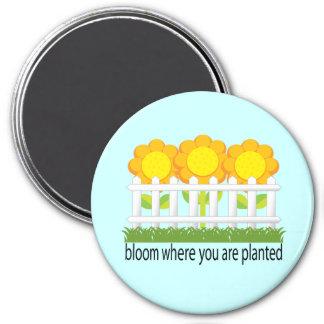 Floración donde usted está imán plantado