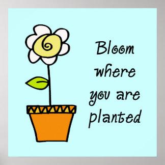 Floración donde usted está poster plantado