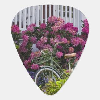 Floración espectacular de la primavera, antigüedad uñeta de guitarra