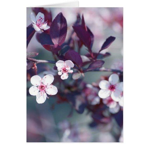 Floración Felicitacion