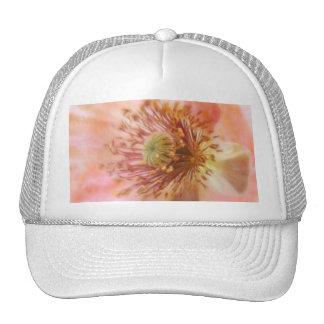 Floración frágil - amapola de la primavera gorra