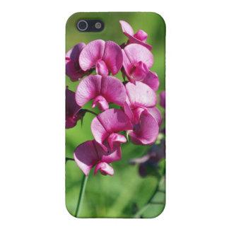 Floración hermosa del guisante de olor iPhone 5 carcasas