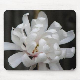 Floración magnífica del Centennial de la magnolia Alfombrilla De Ratones