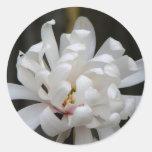 Floración magnífica del Centennial de la magnolia Pegatina Redonda