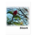 Floración Postales