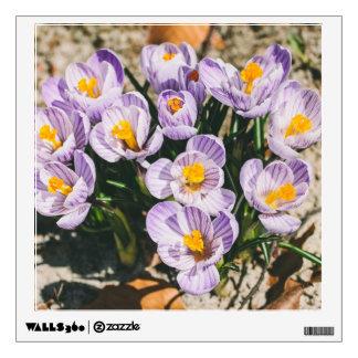 Floración púrpura de las flores del azafrán vinilo