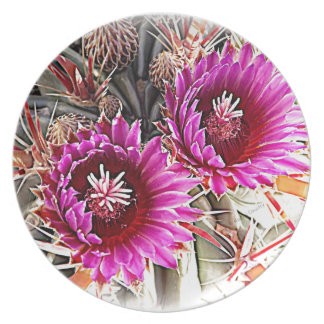 Floración púrpura del cactus platos