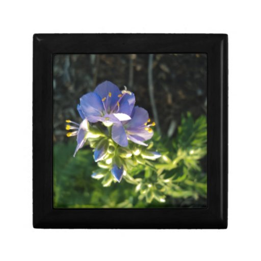 Floración púrpura joyero cuadrado pequeño