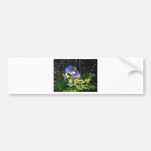 Floración púrpura pegatina de parachoque
