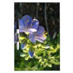 Floración púrpura pizarras