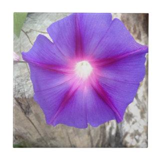 Floración púrpura y rosada de la correhuela teja cerámica