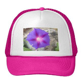 Floración púrpura y rosada de la correhuela gorro de camionero