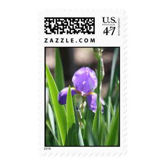 Floración real sello postal