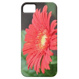 Floración roja y amarilla floral viva de la marga iPhone 5 cobertura