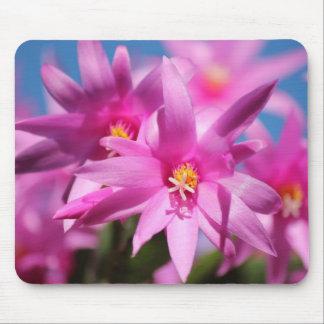 Floración rosada bonita de las flores del cactus d alfombrillas de ratón
