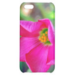 Floración rosada del alazán de cuatro hojas