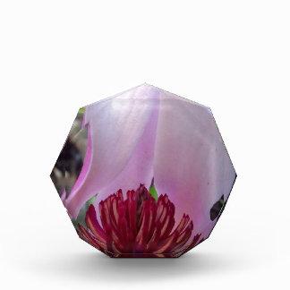 Floración rosada del árbol de tulipán