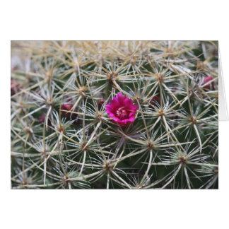 Floración rosada del catus del barril tarjeta de felicitación
