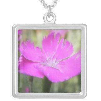 Floración rosada del clavel collar