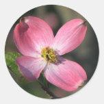 Floración rosada del Dogwood Etiqueta Redonda