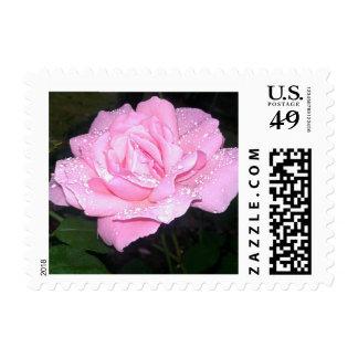 Floración rosada magnífica de la flor sello