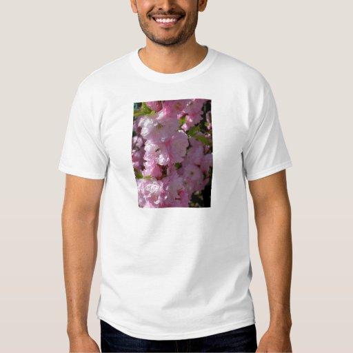 Floración rosada playera