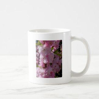 Floración rosada taza de café