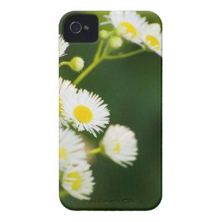 Floración salvaje en el viento iPhone 4 Case-Mate cárcasas
