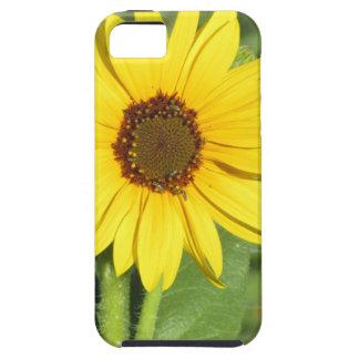 Floración salvaje miniatura del girasol iPhone 5 funda