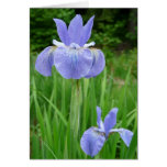 Floración siberiana de la flor del iris del añil a tarjetas