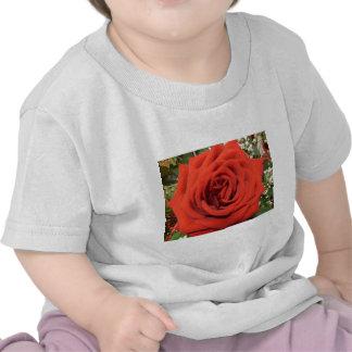 Floración subió camiseta