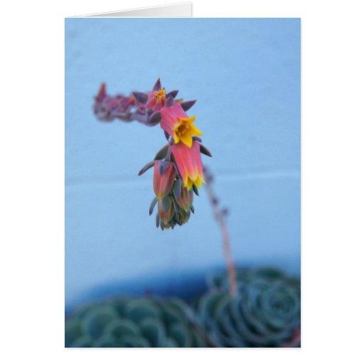 Floración suculenta tarjeta de felicitación