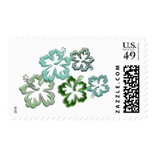 Floración verde del hibisco envio