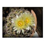 Floraciones amarillas del cactus postal