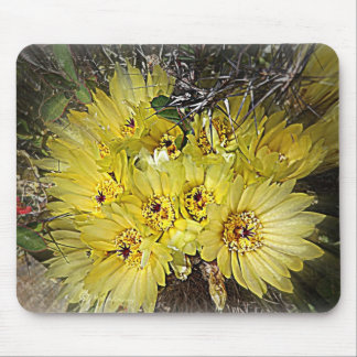 Floraciones amarillas del cactus tapete de ratones